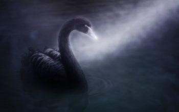 Fenomena black swan